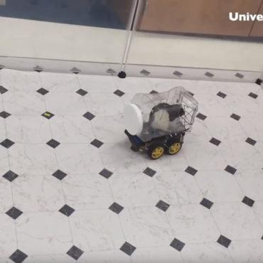 Recherches scientifiques sur les rats : et si les rongeurs pouvaient conduire ?