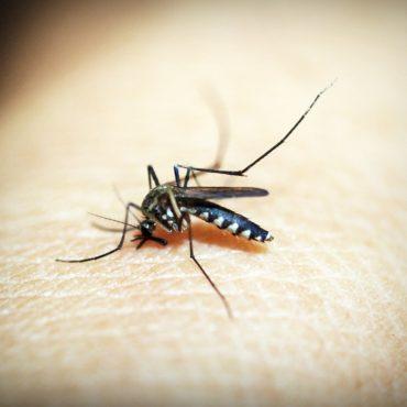 « Eave Tube » : la nouvelle arme de lutte contre le paludisme en Côte d'Ivoire